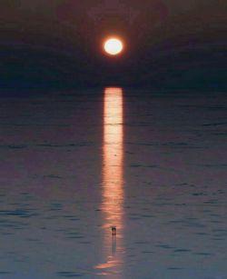 هیچ شبے، پایان زندگے نیست!   از وراے هر شب،    دوبارہ خورشید طلوع مےڪند    و بشارت صبحے دیگر مےدهد.   این یعنے امید هرگز نمےمیرد...      امیدتون روز افزون و شبتون پر نور