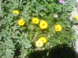 گلهای تو باغچه خونه ما چطورند