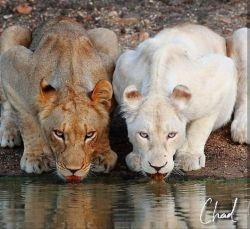 حالا مطمئنی افطار شده داریم آب میخوریم