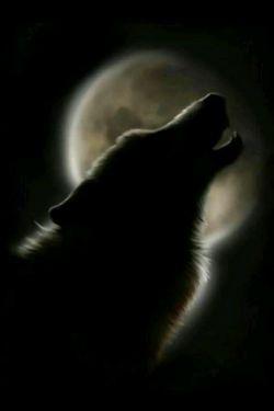 به سلامتی گرگ که بهم یاد داد اعتماد یعنی مرگ