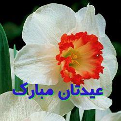 سلام : قبول باشه یڪ ماه تلاش برای بندگے  ..عید بزرگ فطر بر شما بزرگواران مبارک و خجسته باد. ا