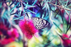 این روزها مانند گلی شده ام که هر پروانه ای روییش می نشیند *  و می رود بی آنکه قصه عادت را بفهمد !
