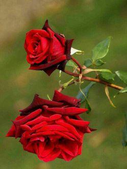 خدایا بنام نامت و توکل به اسم اعظمت، آغاز میکنم، شروع هر لحظه را  ایکه زیباترین علت هرآغاز تویی امروزم را با تلاش و مهربانی به تو میسپارم.