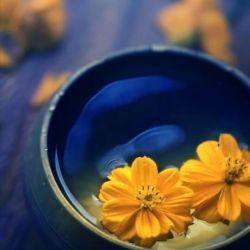 ســـلام طلوع صبحگاهتون به شادابی گلهای بهاری روزتون به زیبایی شکوفهها صبح زیباتون سرشار از شادی بارش بوسه های خداوند پای تمام آرزوهای قشنگتون صبح.دوشنبــــه.تون.عالی