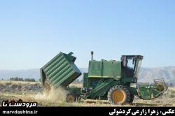 برداشت گندم از مزارع #مرودشت