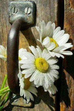 ❁﷽❁..ذکر روز چهارشنبه  {یا حــــی و یا قیوم..ای زنده ای پاینده} در زندگی هیچ لذتی بزرگتر از غلبه  بر سختی وجود ندارد،،  لذت عبور از یک پله و رفتن به پله بعدی،، ساختن آرزوهایی جدید  وتماشای به ثمر نشستن آنها،، همه اینها لذت بخشند..کار خـدا نشد ندارد. خواسته هایت را به او بسپار..او بهترینها را به تو نشان خواهد داد...سلاااااام صبح بخیر آرزو میکنم سبد امروز تون پر شود از عشق بخدا...۹۷/۳/۳۰