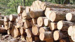 کشف 30 تن چوب قاچاق در فومن فرمانده انتظامی فومن از کشف 30 تن چوب قاچاق در این شهرستان خبر داد. ادامه خبر در: http://www.paperandwood.com/Fa/NewsItem/?nID=6695