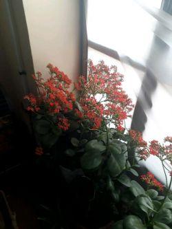 گل دست پرورده مادرم تقدیم به تمام دوستهای مثل گلم تو لنزور