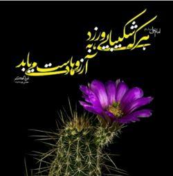 امام علی(ع): هر که شکیبایی ورزد به آرزوها دست می یابد.