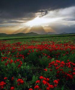 یک دنیا ارادت تقدیم  به دوستانی که بهانه مهر و سرآمد ِعشقند وجودتان سبز و سلامت، روزتون پر از خیر و برکت