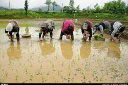 زیبایی های شمال...الان درشمال فصل کاشت برنج هست.