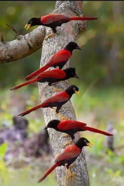 ❁﷽❁..ذکر روز پنجشنبه {لا اله  الا الله الملک الحق المبین..معبودی جز خدا نیست،پادشاه حق آشکار} پروردگارا.. ای که همیشه عاشقانه مرا هدایت کردی به تو نیاز دارم !  محتاج مهر و عشقِ بی حد و کرانت هستم. راه را به من نشان بده هدایتم کن به سویی که عشق باشد، هدایتم کن به سویی که پاکی باشد و خوبی و مهربانی، هدایتم کن به راهی که انتهایش نور باشد،  نوری که از عشق تو میتابد ...سلاااااام صبح تابستتون بخیر آخر هفته تون شاد و زیبا کنار خانواده و عزیزانتان ..۹۷/۴/۱۴