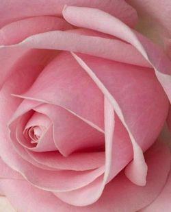 ای دوست♡♡♡♡♡ بودنت سبز و دلت سبز و حضورت سبز♧♧♧♧♧ خانه ات گرم،دلت نرم چراغت روشن،روزگارت آرام توسن بخت برایت رام دست خوش بوی خداهمراهتون روزتون بخیر وپر از شادی وبرکت