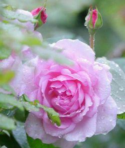 سلام دوستان, سلامی به زیبایی نگاه مهربونتون, صبح اولین روز هفته شما بخیر و شادی. امیدوارم هفته ای پر از شادی و موفقیت پیشرو داشته باشید. ان شاء الله