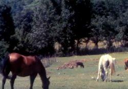 فیلم مستند قاب سبز  www.filimo.com/m/CS9kN