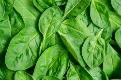 اگر می خواهید تا کهنسالی از سلامتی برخوردار باشید اسفناج بخورید . اسفناج دارای کلسیم بالا است و بدن را سالم نگه میدارد این سبزی یک منبع عالی و غنی از ویتامینC و ویتامینA است .