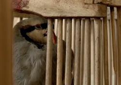 فیلم مستند «شکارچی»          www.filimo.com/m/szFyu