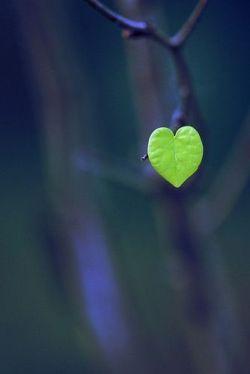 من بودم و دلی و هزاران شکستگی / آن هم به زلف پرشکنت رفته رفته رفت /  گفتی که رفته رفته چو عمر آیمت به سر / عمرم ز دیر آمدنت رفته رفته رفت ...  #محتشم_کاشانی