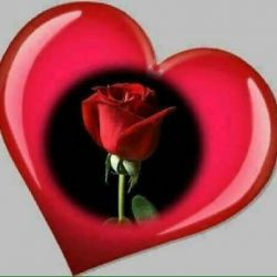 شریفترین دل ها  دلی است که اندیشه ی آزار دیگران در آن نباشد ...  شاد کردن دل انسانها ارزشش بیشتر از سال ها راز و نیاز است ..