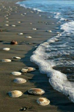 اعتبار سربلندی در فروتن بودن است چشمه شد فواره وقتی بر سر خود پا گذاشت موج راز سر به مهری را به دنیا گفت و رفت با صدف هایی که بین ساحل و دریا گذاشت