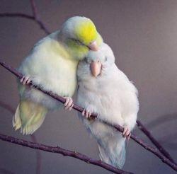 چنان موافق طبع منی و در دل من/ نشستهای که گمان میبرم در آغوشی...  #سعدى... #کشیده_ایم_در_آغوش_آرزوی_تو_را...   #حزین_لاهیجی