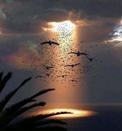 ای کاش دلم پنجرهای دیگر داشت! ای کاش دلم فقط شقایق می کاشت! ای کاش کسی می آمد و غم ها را از قلبِ اهالی زمین برمیداشت..