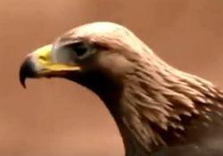 فیلم مستند عقاب، پادشاه آسمان ها  www.filimo.com/m/MLst6