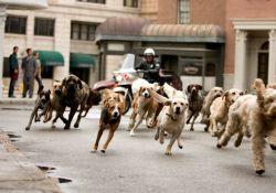 فیلم سینمایی هتلی برای سگ ها  www.filimo.com/m/Pjgzo