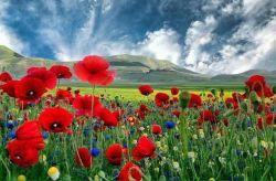 آسمان زندگیتان سرشار از زیبایی و صداقت صبحتون بخیر و خوشی
