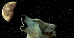 گرگی زار زار می گریست! بدون شک * کلاغـــ ی * به گوشش رسانده بود * که بعضی آدم ها شبیه تو هستن...