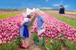 صبح زیباست  اگر با لبخند آغاز شود  بخند تا تابلو زندگی ات پر از رنگهای شاد شود