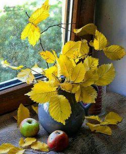 شهریور چه عاشقانه روزهایش را ورق میزند تا برسد به پاییز مجالی نیست  باید رنگها را مهمان برگها کرد پاییز میآید و باز شهریور میماند و عاشقانههایش   پیشاپیش پاییزتان زیبا