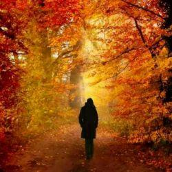 بازپاییزاست اندکی ازمهرپیداست حتی دراین دوران بی مهری بازهم پاییز زیباست امیدوارم  بااومدن پاییز  هر یک برگ که میفته یک دونه ازغمهای دلتون کم بشه مهرتون قشنگ