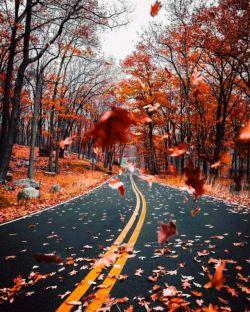 پاییز جان! چه سرد ، چه درد آلود چون من تو نیز تنها ماندستی  ای فصل فصلهای نگارینم پاییز ای قناری غمگینم...
