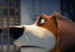 انیمیشن ازی سگ نترس  www.filimo.com/m/ci0wM