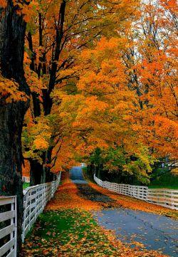 پاییز زیبا ،،،،