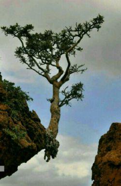 #امید  اگر خدا نخواهد هیچ برگی از درخت نخواهد افتاد. چه برسد به خود درخت...  پس با امید زندگی کنیم... و مطمئن باشیم قدرتمندترین قدرت عالم مراقب ماست...