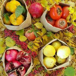 از پائیز داریم قشنگتر؟ بارون و برگ زرد و انار و به و لبو یک قهوه،شال بافتنی،سیب و خرمالو