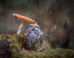 گنجشک از باران پرسید:  کار تو چیست؟! باران با لطافت جواب داد:  تلنگرزدن به انسانهایی  که آسمان را از یاد بردہ اند... سلامممممم وقتتون بخیر شادی ⚘⚘⚘⚘ لحظه هاتون شیرین ⚘⚘⚘⚘⚘