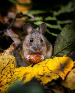 موش کوچولوی بامزه