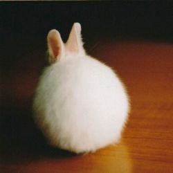 توپ کی بودی تو ؟  خرگوش موش موشی گردالی :-*