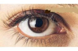 چشم قهوهایها  از لحاظ علم روانشناسی ژنتیکی،افرادیکه رنگ چشمان آنها عسلی یا قهوهای باشد وفادارترین و خوشطینتترین افراد هستند آنها کمی خجالتیاند واحتمال خیانتدر آنها بسیار پایین است .. من ک چشام قهوه ای سوخته ست ینی خیانت در من راه نداره خخخخ
