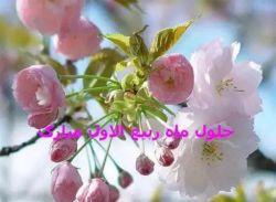 مشکی از تن به درآرید ربیع آمده است خم ابرو بگشایید ربیع آمده است مژده ای ختم رسل داد که: آید به بهشت هر که بر من خبر آرد که ربیع آمده است ⚘⚘⚘حلول ماه ربیع الاول مبارک⚘⚘⚘