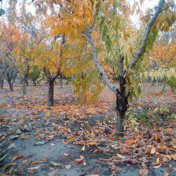 پاییز برگ ریز هزار رنگ #سبحان_الله #زیبایی_های_پاییز