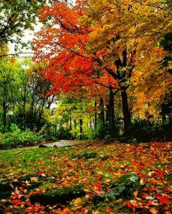 درود بر اهالی لنزور.... بامداد پاییزی تان به نیکی و شادکامی