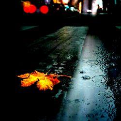 """""""باران"""" نمكى ست كه روى  جاى خالى ات میریزد... عجیب میسوزاند! #علی_قاضی_نظام"""