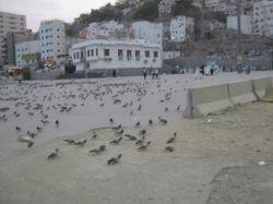 کبوتران حرم امن الهی - مکه