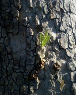 وه خاطرت یہ دار  ڪووے نہ یمـ.* بہ خاطر یڪ درخت جنڪَلـے رو ندیدمــ...
