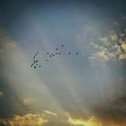 هوا آرام آفتاب مهربان  راه آسمان ها باز ! خیالم  چون كبوترها در حوالی تو  می كند پرواز ...