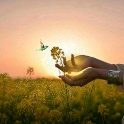 دستی افشان تا ز سر انگشتانت صد قطره چکد هر قطره شود خورشیدی باشد که به صد سوزن نور  شب ما را بکند روزن روزن...  #سهراب_سپهری i